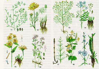 rośliny lecznicze