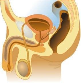 Prostata leczenie naturalne